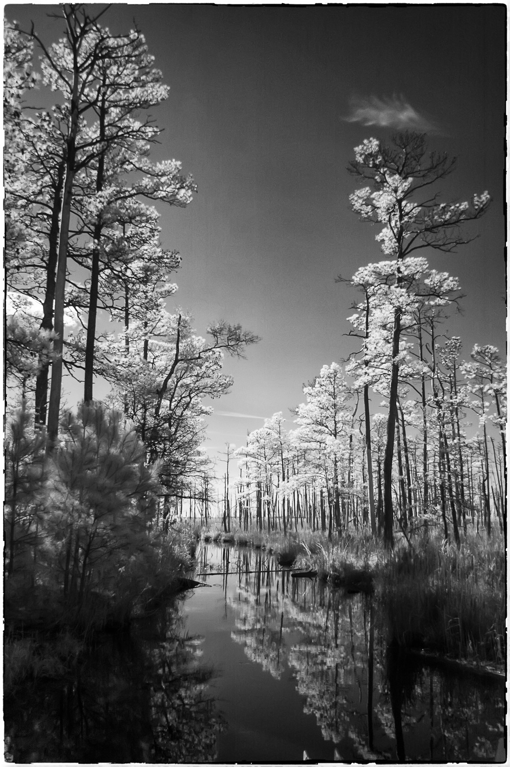 Infrared in Blackwater NWR