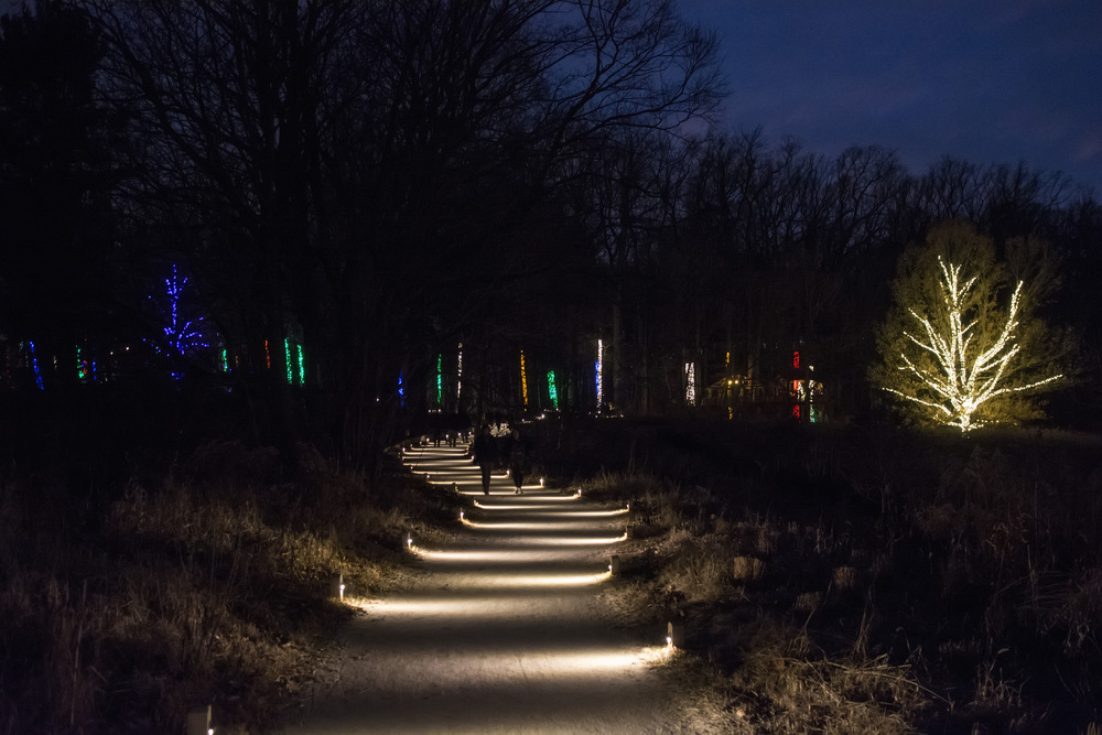 Meadow walkway at night