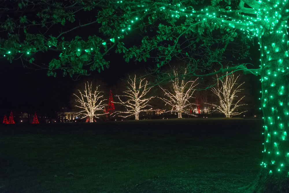 lit trees at main entrance