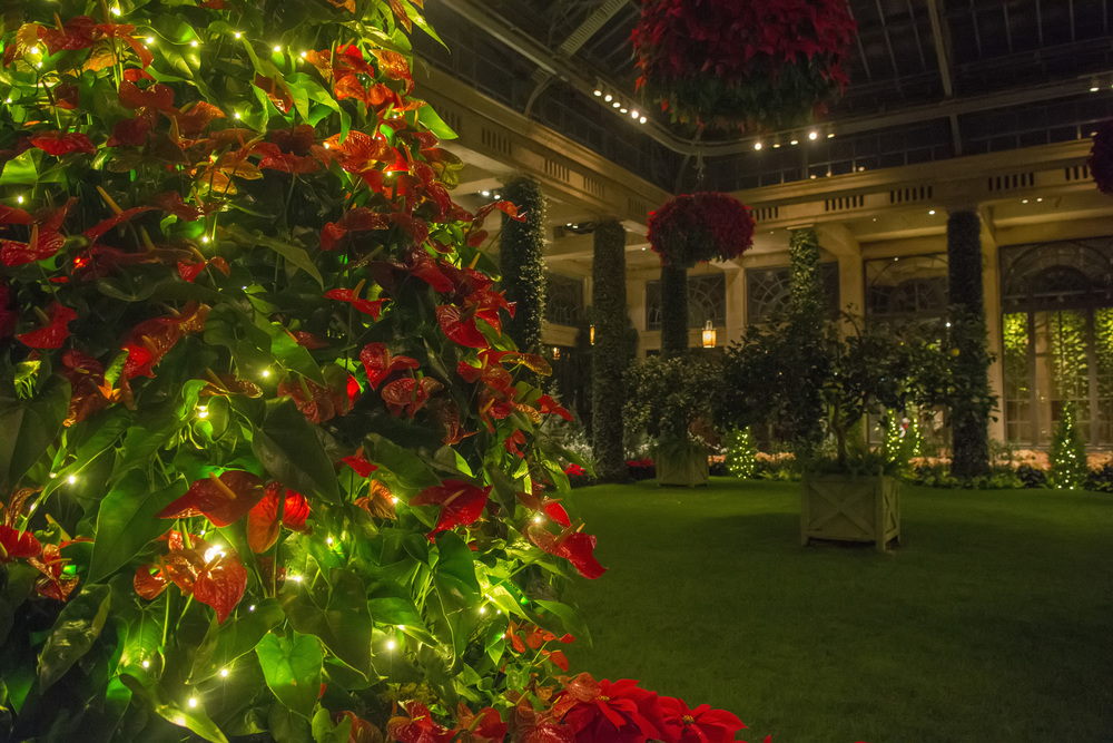 inside conservatory at night