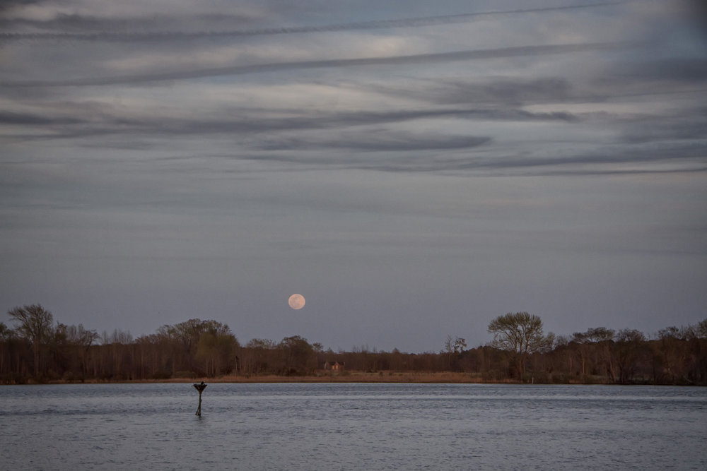 Moonrise Blackwater NWR