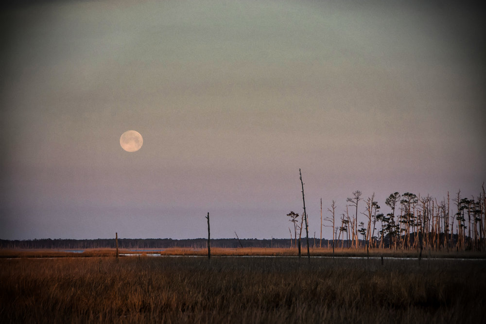 Moonset Blackwater NWR
