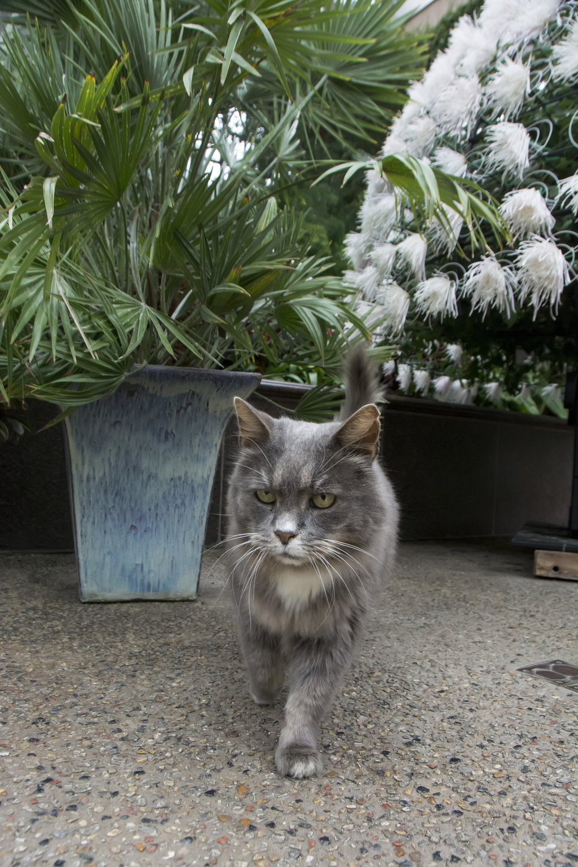 Longwood Gardens fera cat