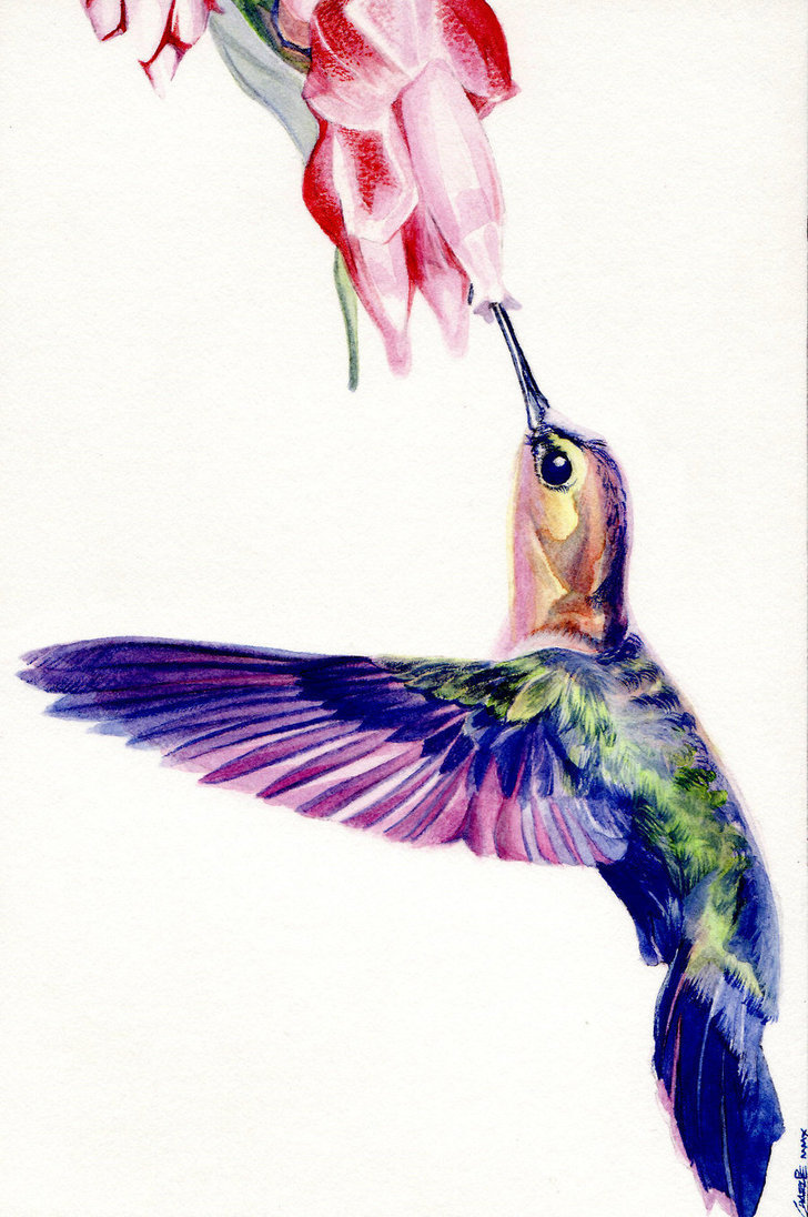 Hummingbird_by_artofmadness.jpg