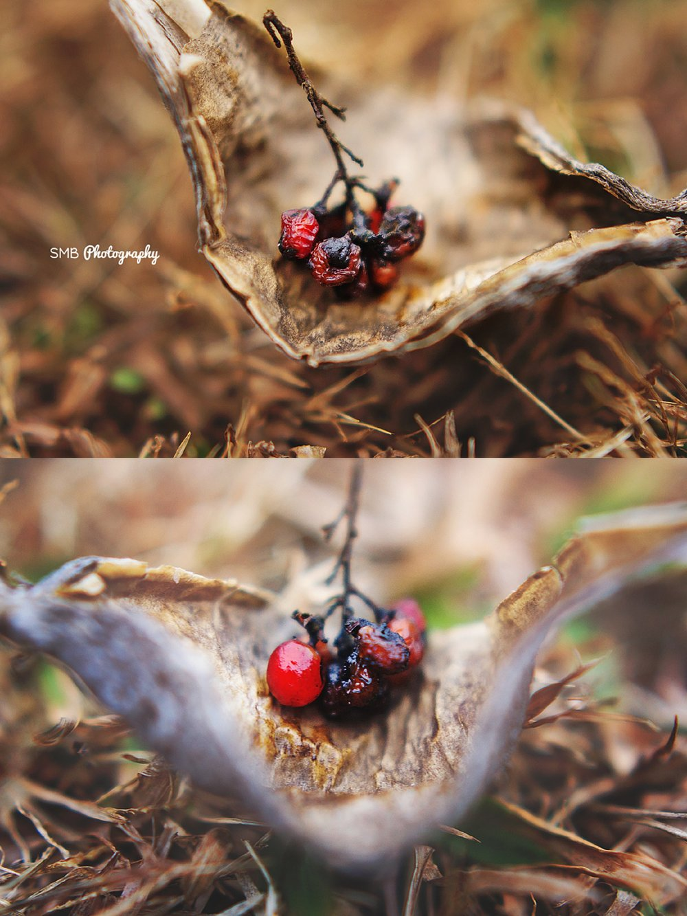 Macro Photography | Berries | SMB Photography