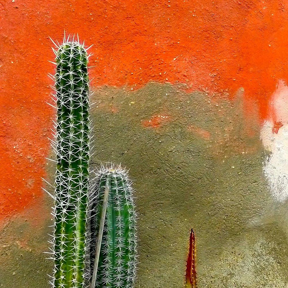 Tuscan Cacti (Villa di Richard Ingersoll