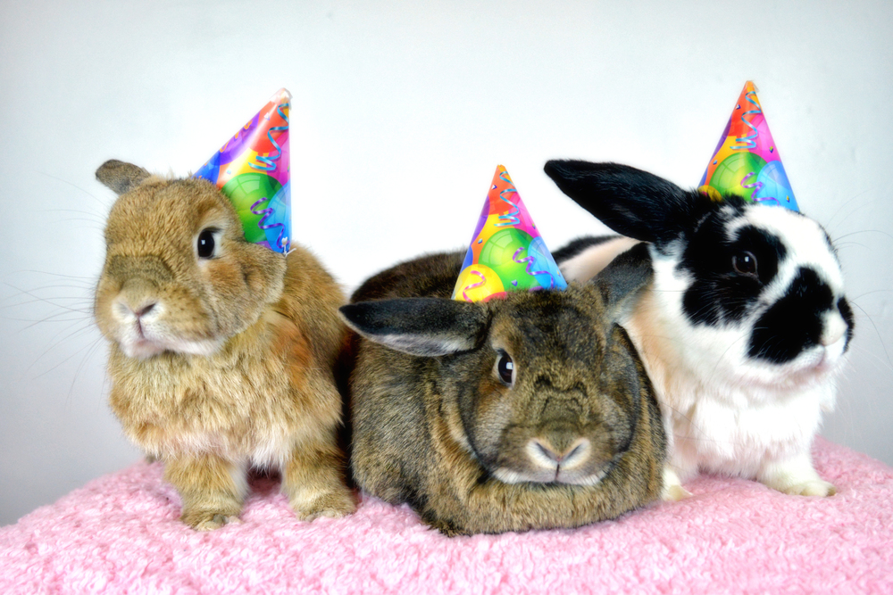 Sandrachile-rabbits