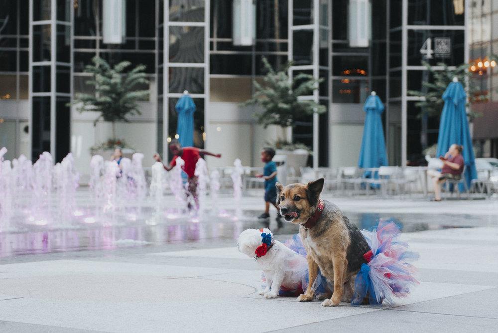 Dogs-ppg056148.JPG