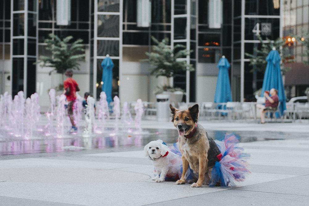 Dogs-ppg059151.JPG