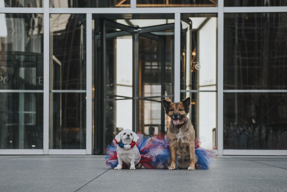 Dogs-ppg067142.JPG