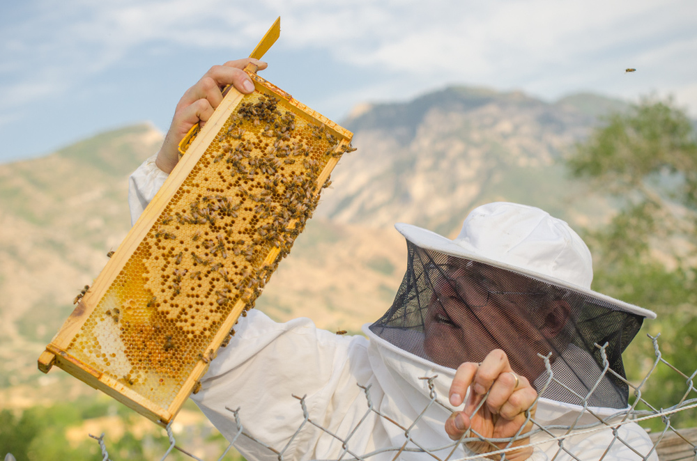 Utah Beekeepers Association President Sam Wimpfheimer