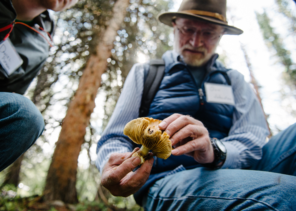 Don Johnston gives a mycology lesson in the field.