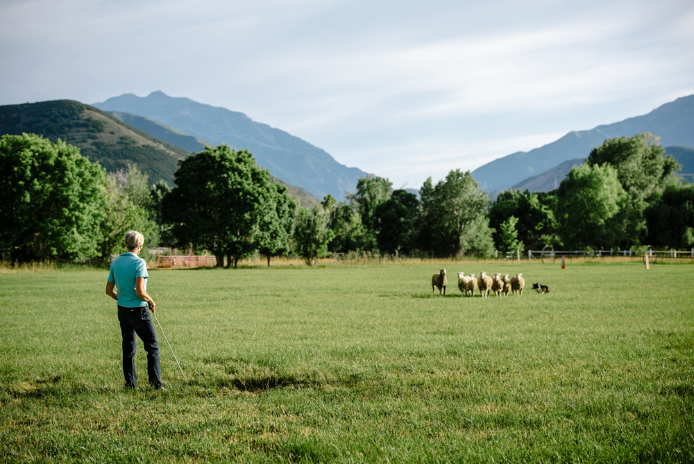Clawson runs her dogs on her property at the base of Mt. Timpanogos to ready them for the Solider Hollow Classic