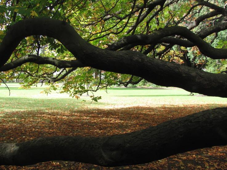 BotanicGardensRennataGiovanoliCampbell.jpeg