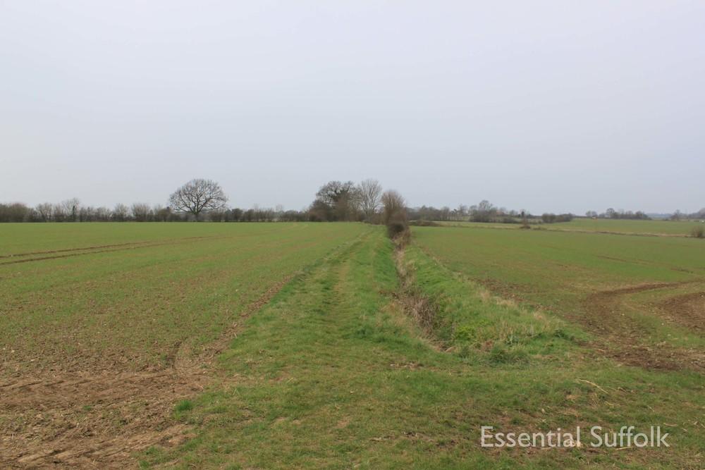 Cretingham dog walk02.jpg