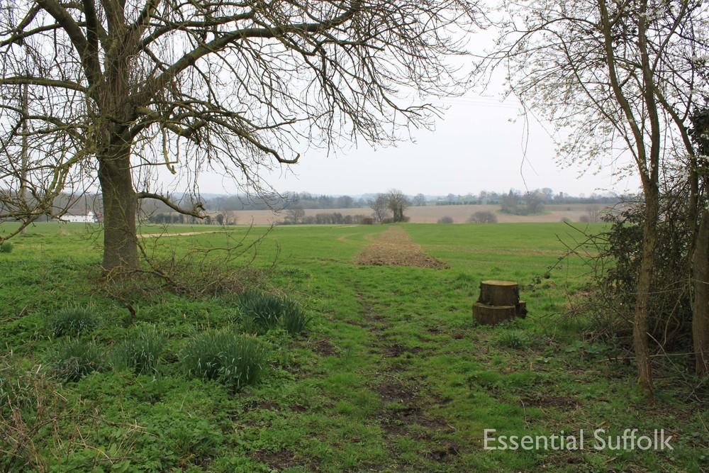 Cretingham dog walk05.jpg