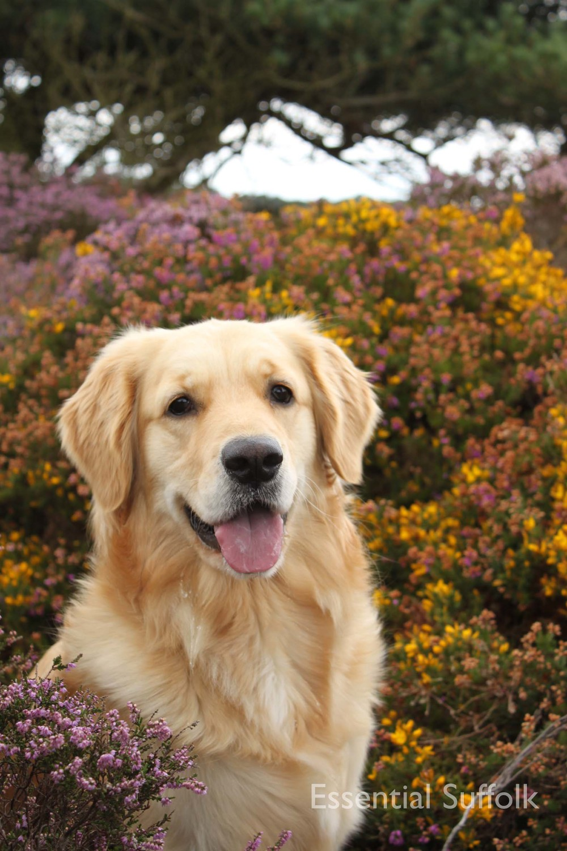 Dunwich dog walk 107.jpg