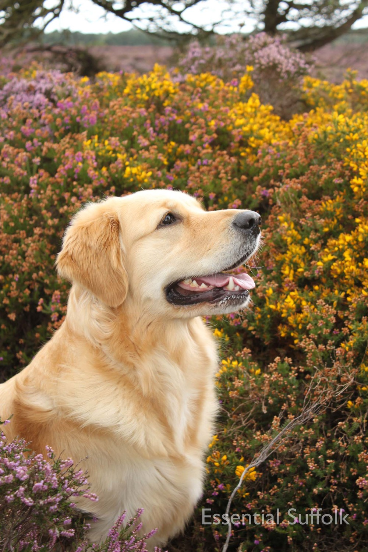 Dunwich dog walk 106.jpg