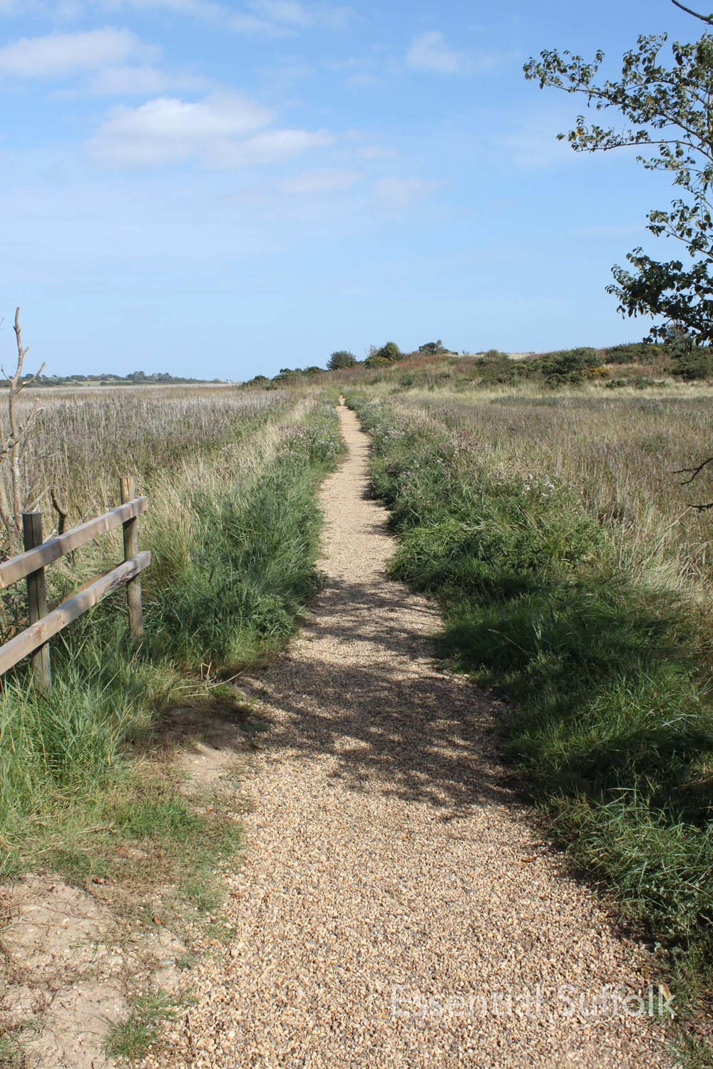 Dunwich dog walk 219.jpg