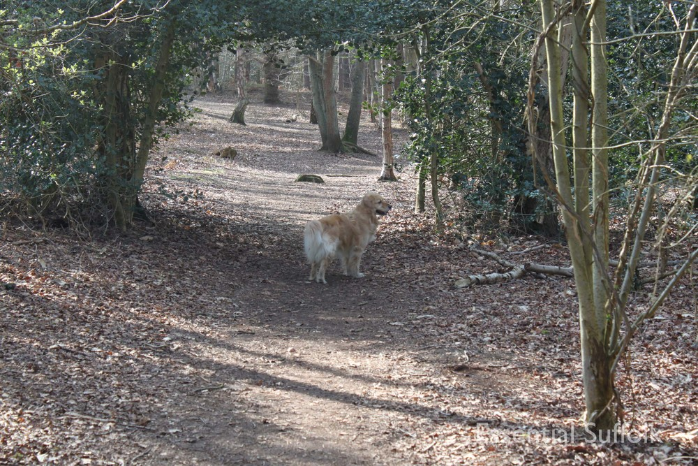 Dunwich dog walk 308.jpg