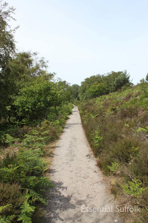 Eastbridge dog walk 04.jpg