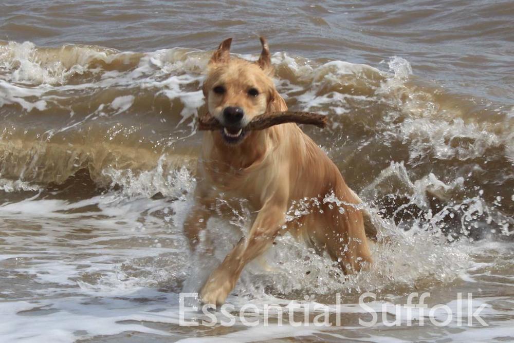 Eastbridge dog walk 11.jpg