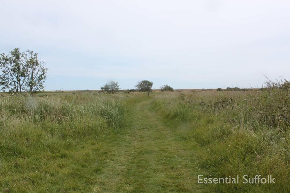 Eastbridge dog walk 12.jpg
