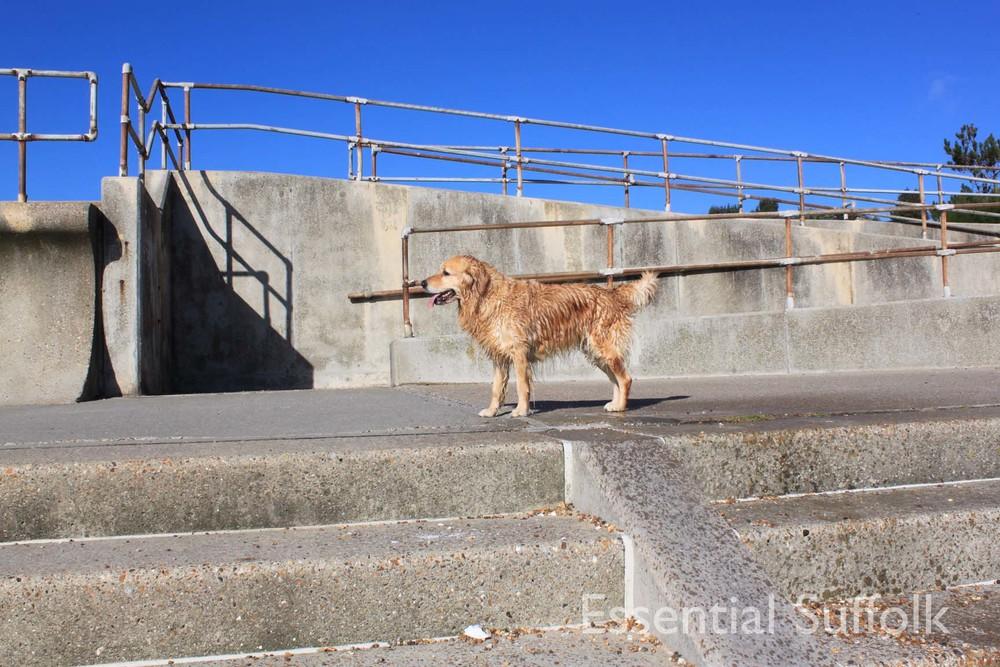 Felixstowe dog walk 08.jpg