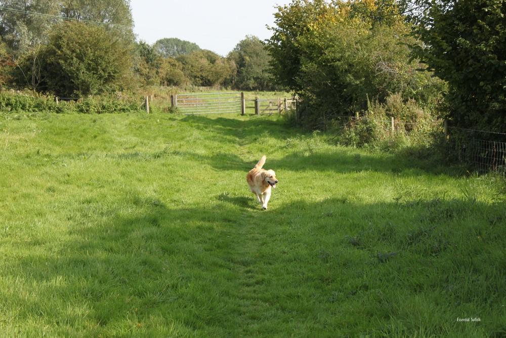 Grundisburgh Dog Walk 101.jpg