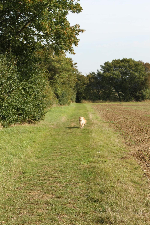 Grundisburgh Dog Walk 104.jpg