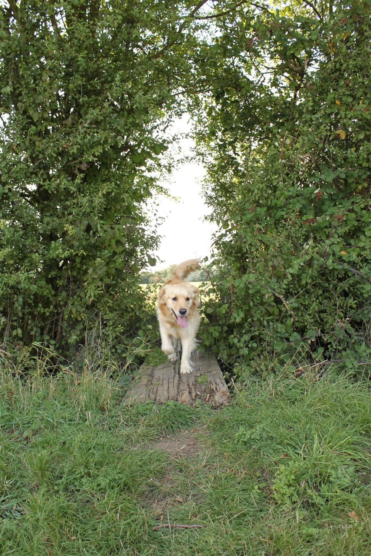 Grundisburgh Dog Walk 105.jpg
