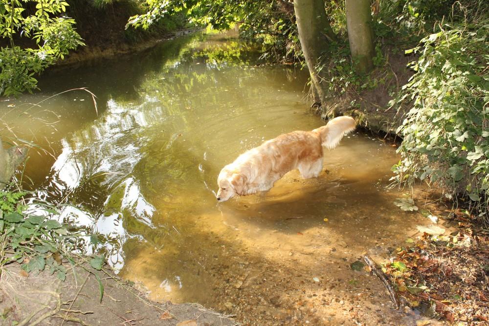 Grundisburgh Dog Walk 113.jpg