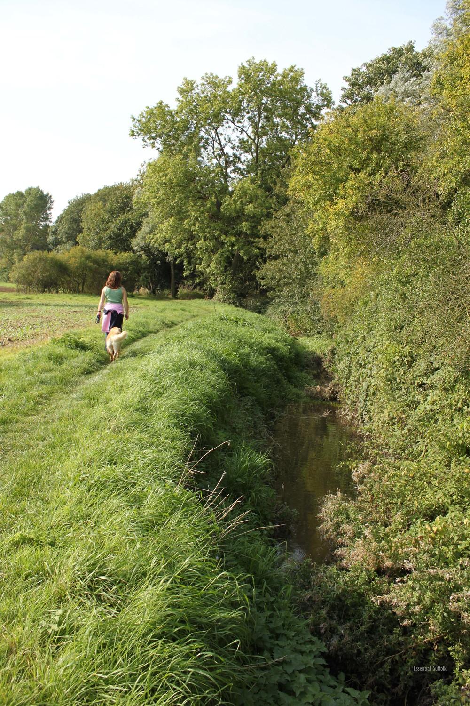 Grundisburgh Dog Walk 117.jpg