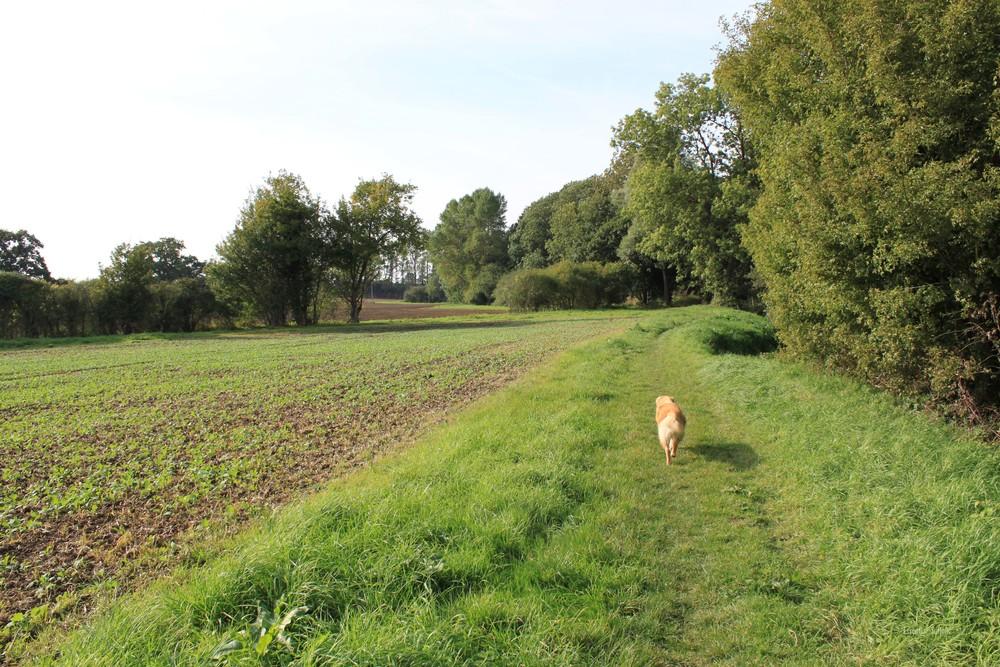Grundisburgh Dog Walk 116.jpg