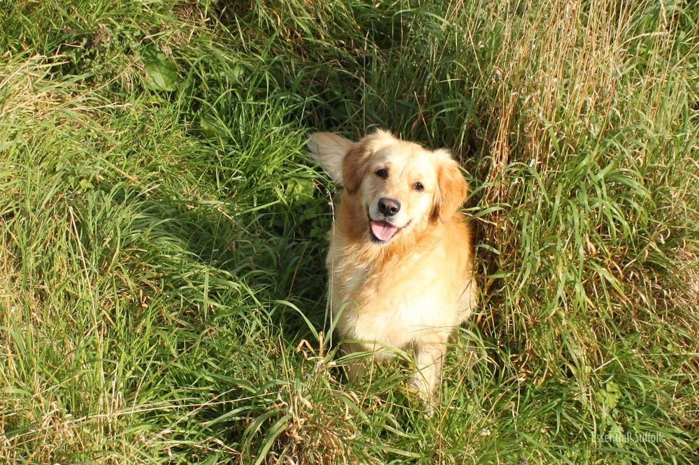 Grundisburgh Dog Walk 119.jpg