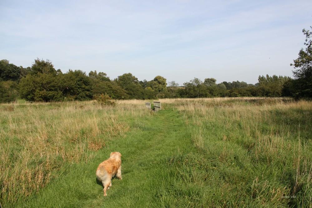 Grundisburgh Dog Walk 118.jpg