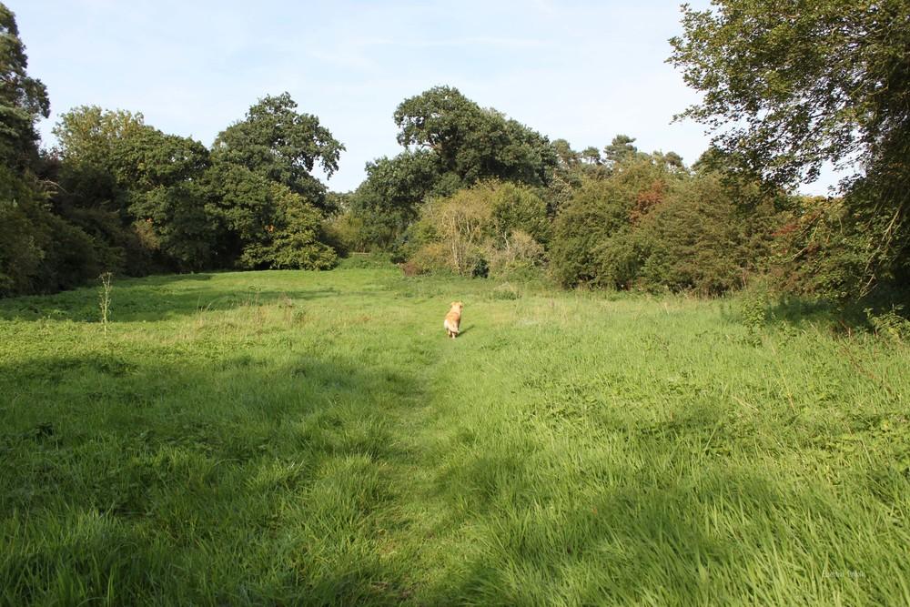 Grundisburgh Dog Walk 120.jpg
