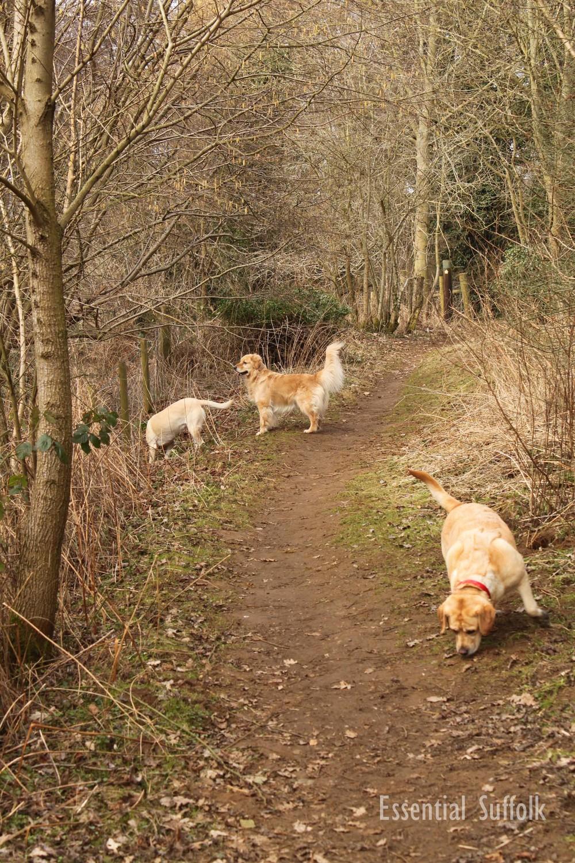 Newbourne Dog Walk 2 02.jpg