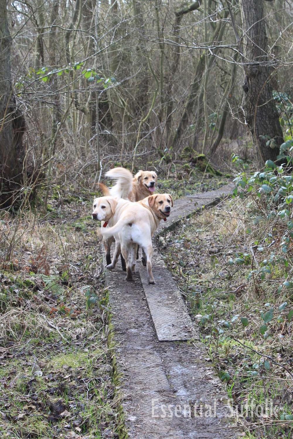 Newbourne Dog Walk 2 09.jpg