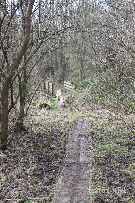Newbourne Dog Walk 2 08.jpg
