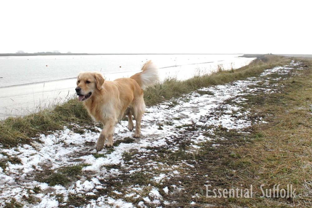 Orford Dog Walk03.jpg