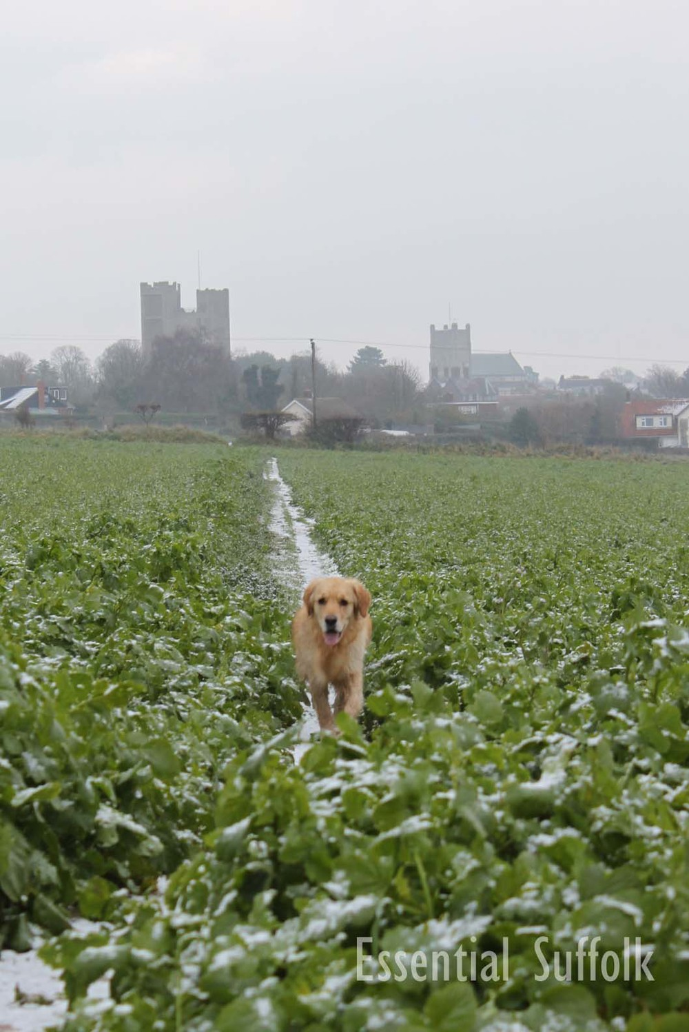 Orford Dog Walk09.jpg
