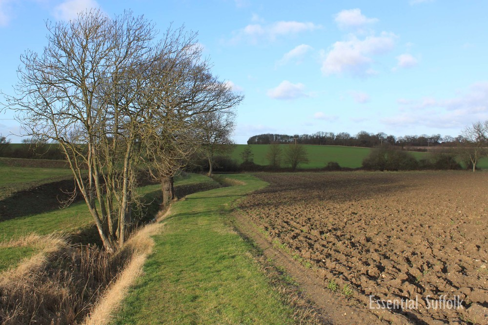 Sibton Dog Walk 1 06.jpg