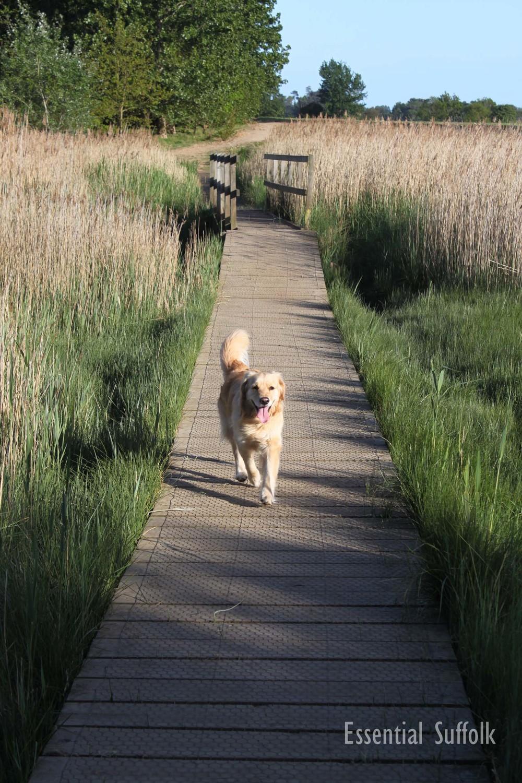Snape Dg Walk 03.jpg