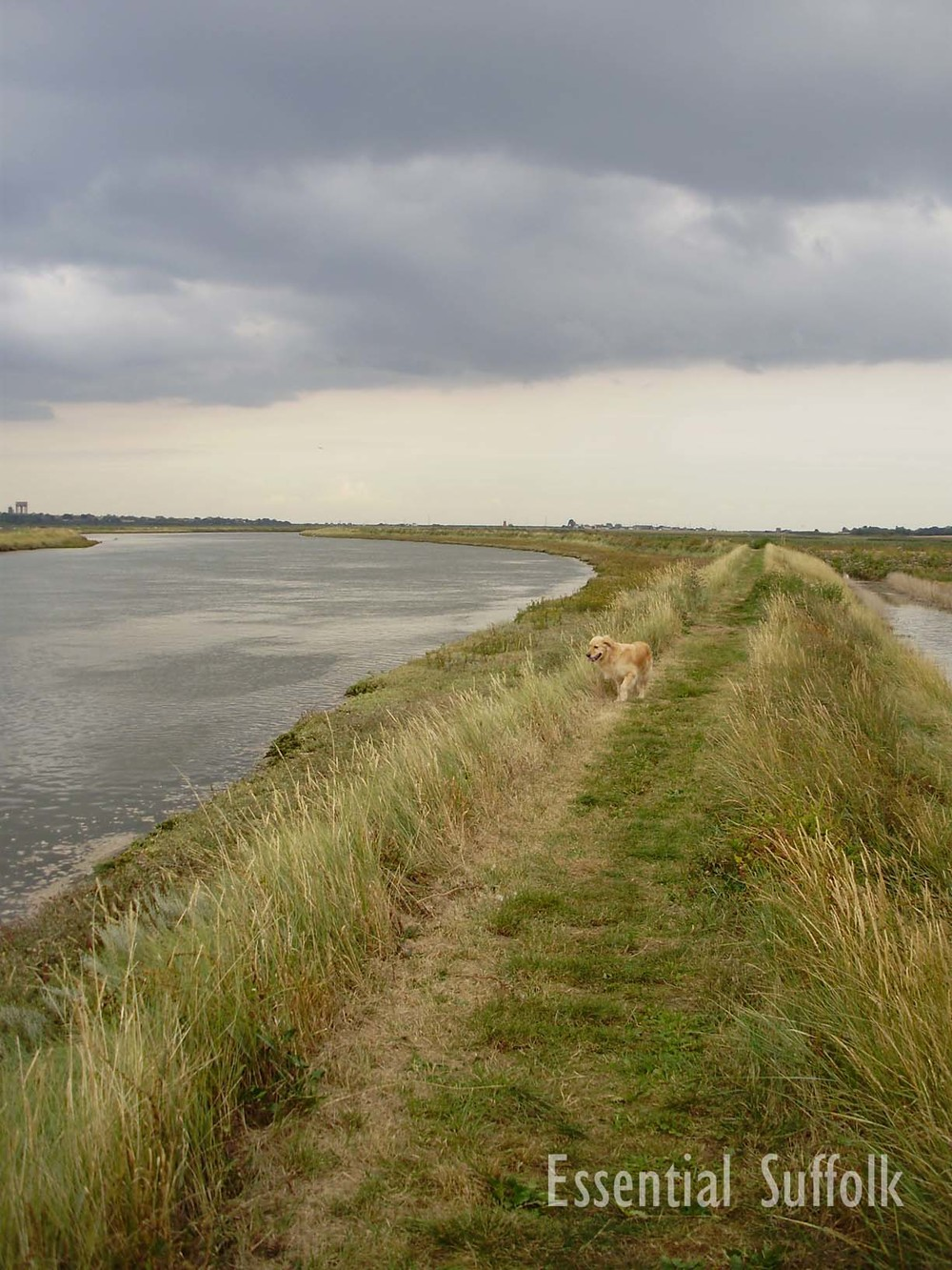 Walberswick Dog Walk 10.jpg