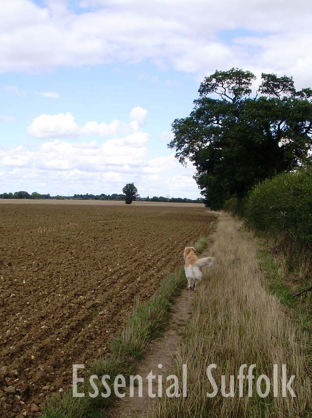 Westerfield Dog Walk 02.jpg