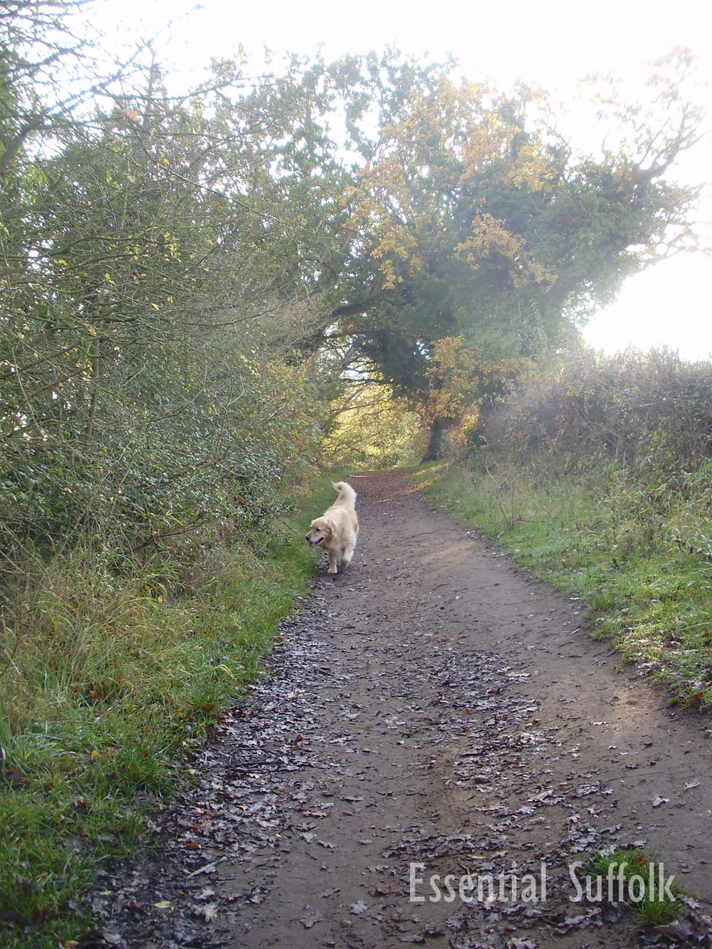 Woodbridge Dog Walk   01.jpg