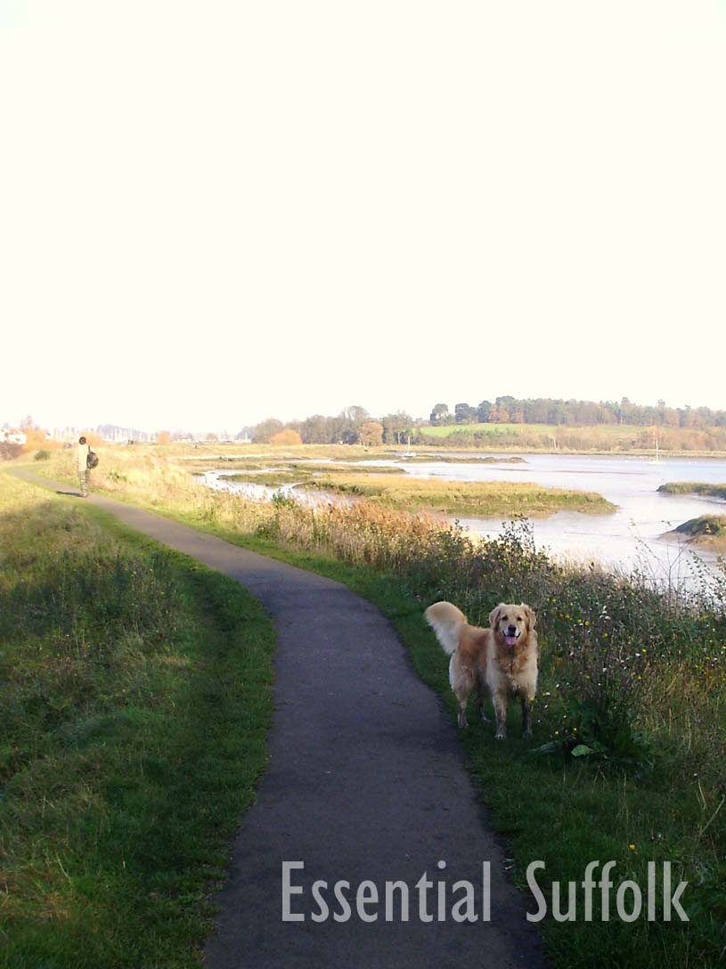 Woodbridge Dog Walk   07.jpg