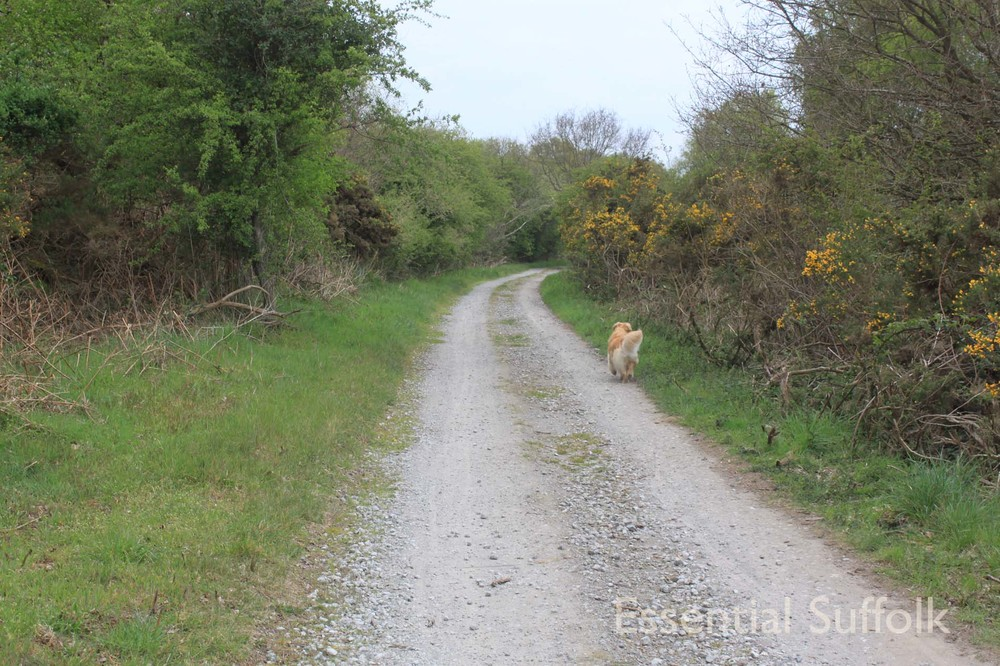 Thorpeness Dog Walk03.jpg
