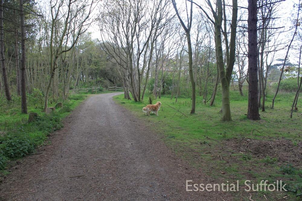 Thorpeness Dog Walk07.jpg